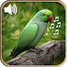 Latest Bird Ringtones 2018