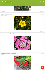 screenshot of PlantNet Plant Identification version 2.4.1