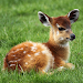 Download Stunning Deer Wallpapers: Beautiful Deer 1.0 APK